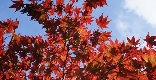 intro bladeren lucht