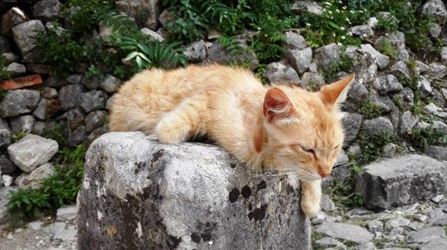 Lazy cat Montenegro